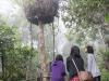 ケアンズの植物園で。巨大な木にビックリ。