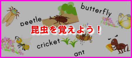 昆虫を覚えよう!