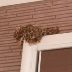 つばめの巣は縁起が良い?